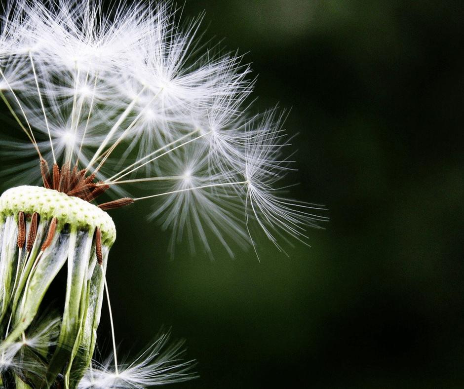 Етерични масла при алергии